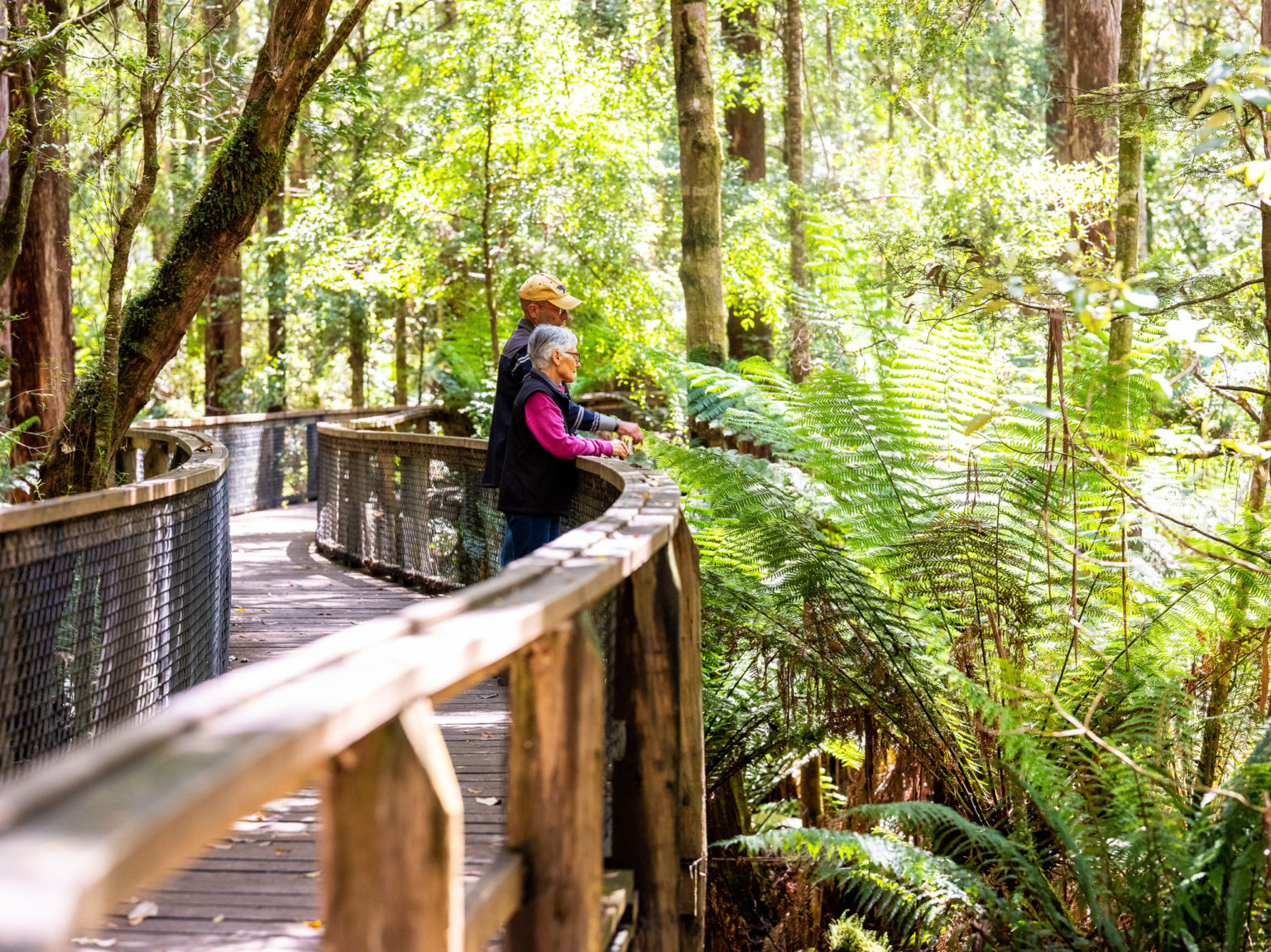 Huon Valley's Caves, Walks and Forests - The Huon Valley ...